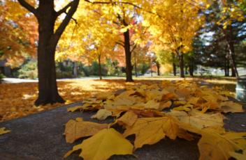 autumn-2898551_1920